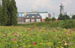 Suiker Unie zaait enkele hectares in met bloemen