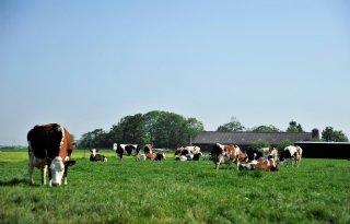 Melkveehouder+gaat+%27gezond+en+veilig+werken%27