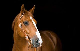 Vereniging+Paarden+Export+en+Transport+Nederland+opgericht