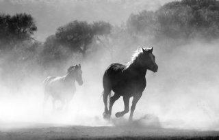 Influenza%2Ddruk+paarden+lijkt+minder