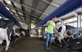 Airco+geeft+koeien+verkoeling+tijdens+warme+dagen