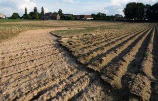 Hoosbuien+en+hagel+teisteren+landbouwgewassen