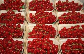 Start+demoplatform+voor+zachtfruit+bij+Van+Garderen
