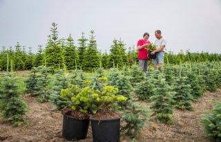 Kerstboomkweker zoekt bedrijfsopvolger