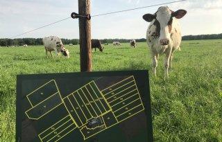 Boer+stuurt+koeien+tweemaal+daags+de+wei+in