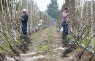 NFO+wil+einde+aan+subsidie+fruitaanplant