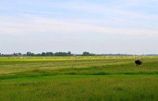 Na+zomer+aan+de+slag+met+bodemdaling+Groene+Hart