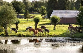 KNMI+verwacht+in+toekomst+meer+kans+op+droge+zomers