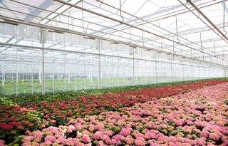 Plantenkwekers+kopen+samen+kavel+voor+groei