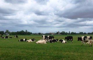 Coalitie+is+landbouw+goedgezind