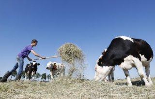 %27Duitse+ruwvoersituatie+bepaalt+melkprijsontwikkeling%27