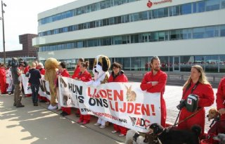 Coalitiepartijen+willen+geen+onnodige+dierproeven