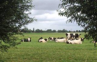 Hoeksche+Waard+wil+proeftuinen+circulaire+landbouw
