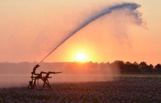 Brabantse+Delta+komt+in+actie+tegen+droogte