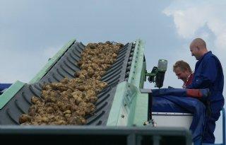 Aardappeltermijnmarkt opnieuw naar 20 euro