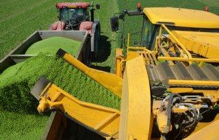 TV: Droogte halveert opbrengst groenteoogst