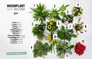 Woonplant+van+de+maand+kentia+opent+2019