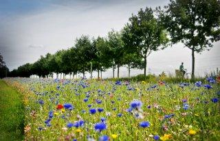 Workshops natuurlijke plaagbestrijding in Noord-Holland