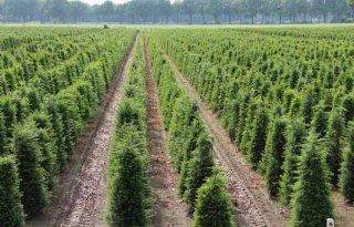 Brussel+wil+importverbod+veertig+soorten+plantmateriaal