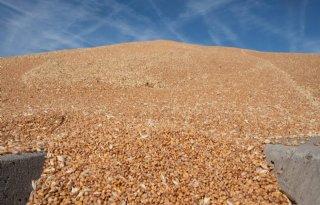 ABN Amro voorziet stijging tarweprijs