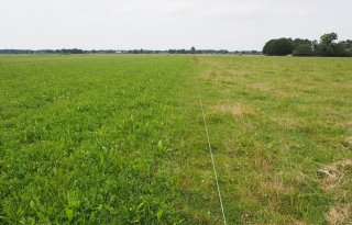 Graskruidenmengsels+in+trek+bij+droogte+en+koeien
