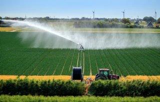 Beregeningsverbod: LTO Noord vraagt uitzondering voor vollegrondsgroente
