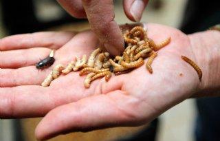 Plan voor insectencentrum Barneveld