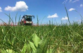 Plantspecifieke ridderzuring bestrijden in grasland