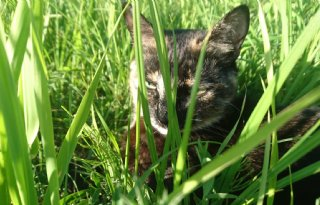 Groningse+boeren+volgen+kat+in+predatieonderzoek