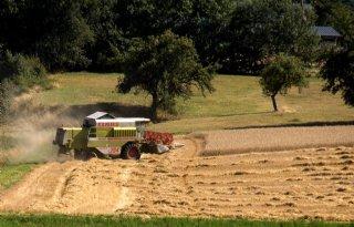 Duitse+boerenbond+verlaagt+oogstverwachting+graan