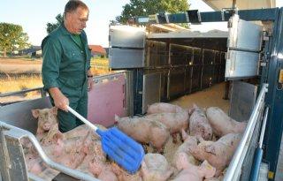 Grote+prijsverschillen+door+Afrikaanse+varkenspest