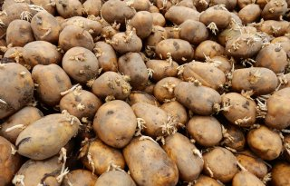 Aardappelen als accu is het beste innovatie-idee