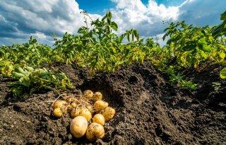 Elektronische+aardappel+houdt+akkerbouwer+op+de+hoogte