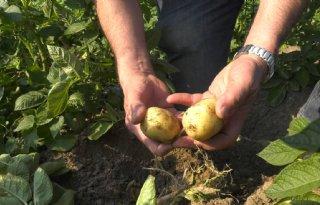 TV: Aardappeltelers luiden noodklok