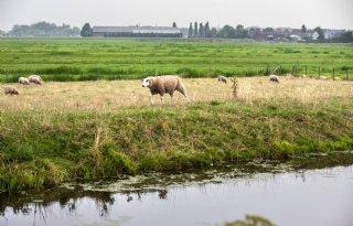 Veerman+leidt+consultatie+veenweide+Noord%2DHolland
