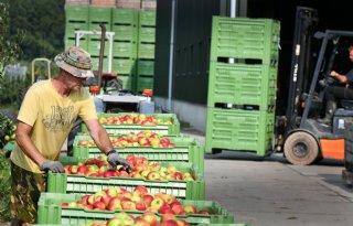 NFO%3A+fruitsector+lijdt+wel+degelijk+financi%C3%ABle+schade