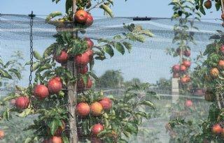 Duitsland+kampt+met+kleine+appelvoorraad