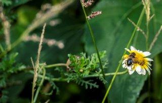 Herstel biodiversiteit vraagt om stimulerende wetgeving