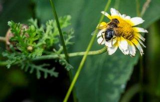 European+Bee+Award+helpt+bij+beschermen+bijen