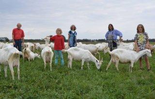 Drietal redt Drentse geitenboerderij Hansketien