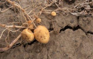 Bauernverband+wil+pragmatischer+droogtebeleid