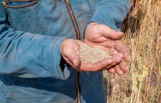Laatheid+ras+van+belang+bij+opbrengst+quinoa