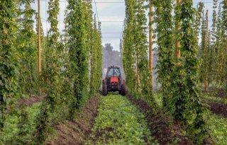 Belgi%C3%AB+is+op+zoek+naar+mannelijke+hopplanten
