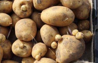 Belgi%C3%AB+stevent+af+op+historisch+lage+aardappelproductie