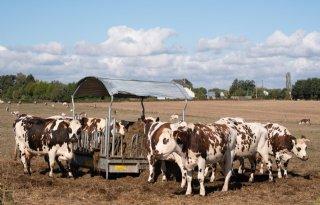 Franse+melkveehouderij+meest+concurrerend