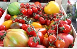 NVWA+haalt+tomatenzaad+met+ToBRFV+uit+handel