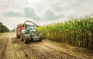 TV: Melkveehouder kiest voor vroeg maisras
