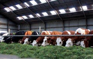 Melkveebedrijf+kan+energieverbruik+halveren