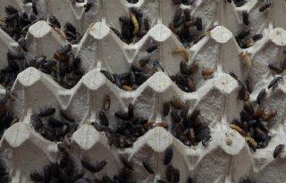 Veel+vraag+naar+larven+en+wormen+van+Wadudu+Insectencentrum