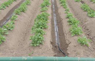 Fors water besparen met druppelirrigatie